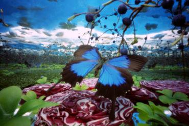 """Bethany de Forest, """"Blauwe vlinder""""."""